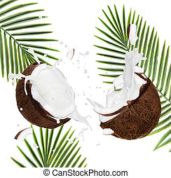 Cracked coconuts on white background, close-up