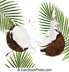 rachado, cocos, branca, fundo