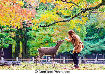 Nara deer at fall, Japan - NARA, JAPAN - Nov 21: Visitors...