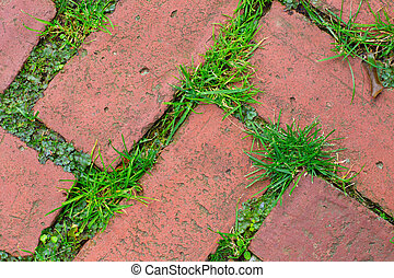 Pavers - Brick sidewalk pavers with grass
