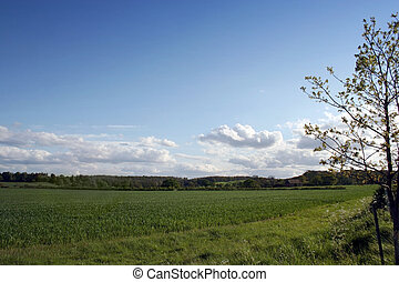 English Countryside in Summer - A lush green field under...
