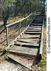 Broken stairs - Broken weathered wooden stairs at pine...