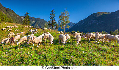 Alpine pastures in the Slovenian Alps Triglav National Park...