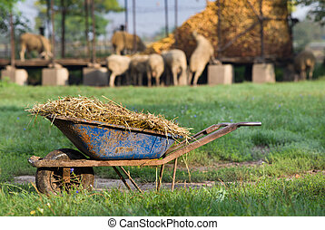 Natural manure - Carts with natural manure standing on sheep...