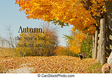 Inspirational quote on Autumn by William Cullen Bryant on a background with a beautiful fall lane with a little chocolate lab puppy.