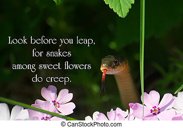German proverb about being cautious in life with a little...