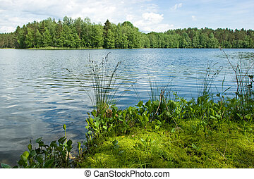 Summer at the forest lake