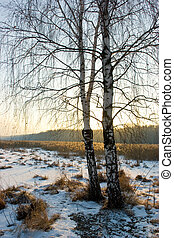 Winter birch-tree - Sunset behind the birch-tree at Yauza...
