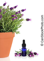 Lavender Herb Flowers and Essence