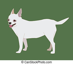 Chihuahua Dog White - Vector illustration of cute dog...