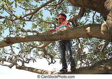 Menino, escalando, árvore