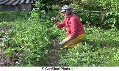 woman weed eat strawberry - Farmer grandmother woman weed...