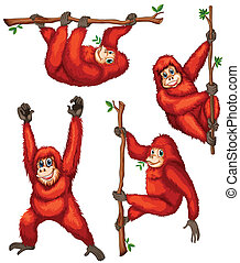 Orangutan - Illustration of orangutan hanging on vines