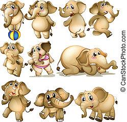Elephant set - Illustration of a set of elephant