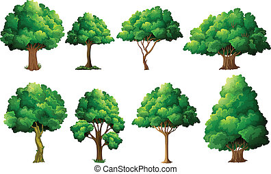Tree set - Illustration of a set of different trees