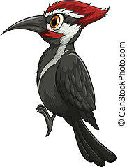 woodpecker - Illustration of a single woodpecker