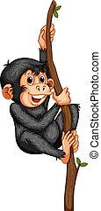 Chimpanzee - Illustration of a chimpanzee hanging on a vine