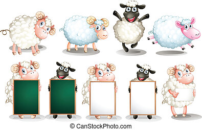 Sheep set - Illustration of many sheeps with different poses
