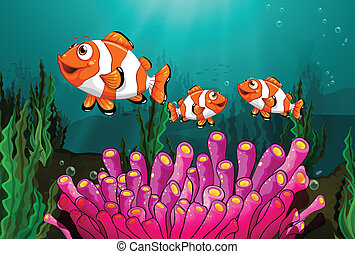 Clownfish - Illustration of clowfish under the sea