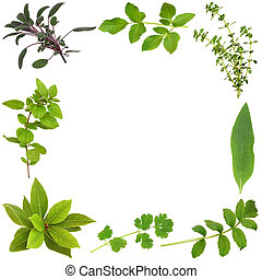 Herb Leaf Abstract Border - Herb leaf selection forming an...