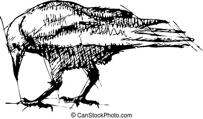 Crows vector Pen Drawing - Hand pen drawn sketch vector...