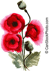 poppies watercolor - Vector illustration of poppies...