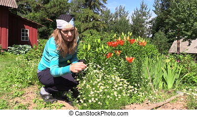 woman reap camomile - turn view of young girl squatting reap...
