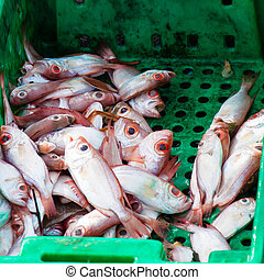 Fresh fish in boxes at the market