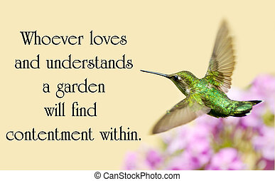 Chinese proverb about nature with a beautiful ruby throated...