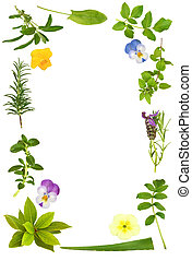 Flower and Herb Leaf Frame - Herb leaf selection with...