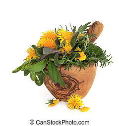 Wild Flowers and Herbs - Wild dandelion and gorse flowers...