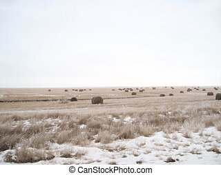 Misty Morning Hay Field - A Saskatchewan prairie hay field...