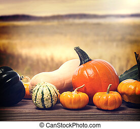 Pumpkins and squashes with autumn brown field background