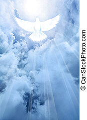 White dove descending from the sky - A pure white dove...