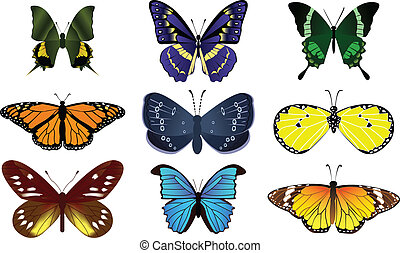 24Butterfly - many type of colorful butter flies on the...