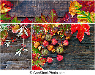 Collage of fall, winter foliage - Collage of fall, winter...