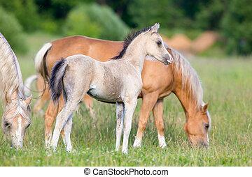manada, caballos, campo