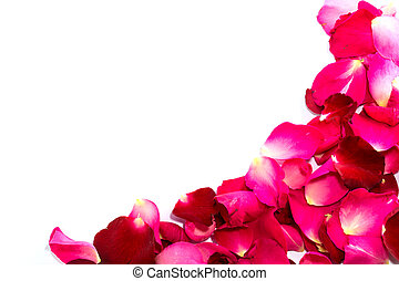Beautiful petals of red roses isolated on white background