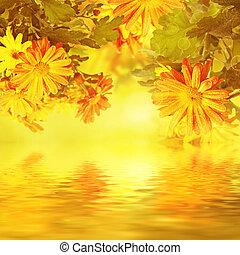 crisântemo, dourado, floral, fundo