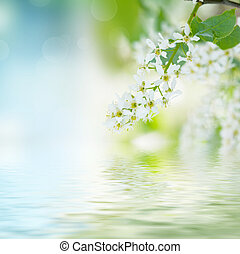 Bird-cherry tree flowers against the blue sky with water...