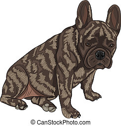 vector french bulldog - French Bulldog dog breed, brindle,...