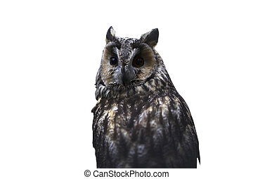 Front view of owl