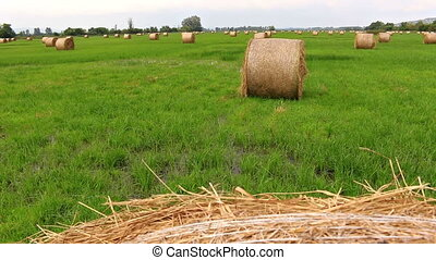 Many bales in the field