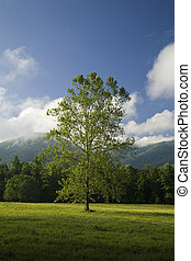 Tree, Cades Cove, GSMNP, TN - Cades Cove, Great Smoky...