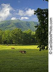 Horses, Cades Cove, GSMNP, TN - Horses, Cades Cove, Great...