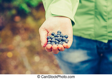 Blueberry fresh picked organic food in woman hand giving...