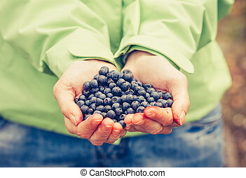 Blueberry fresh picked organic food in woman hands giving...
