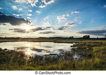 Summer sunset landscape over wetlands