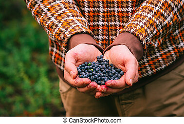 Blueberry fresh picked organic berries food in man hands...