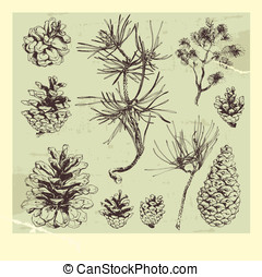 Pine tree - Hand drawn pine tree cones and branches